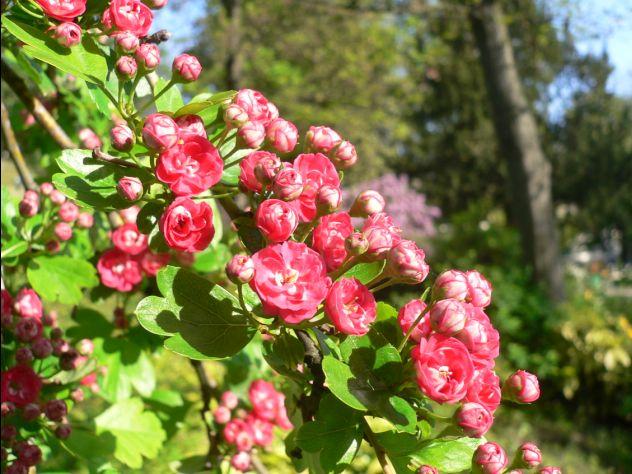 Fleur Avec Boule Rouge Map Titecampagne