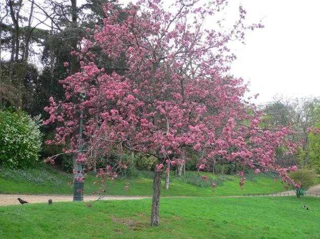 Zgalus - L arbre le pommier ...